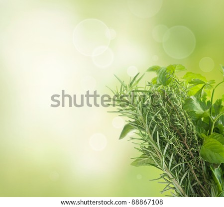 Variety of fresh herbs with copyspace isolated on white - stock photo