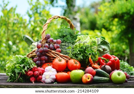 Variety of fresh organic vegetables in the garden. - stock photo