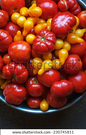 Variety of freshly picked tomatoes from the garden - stock photo