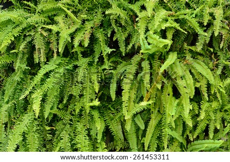 Variety of green ferns - stock photo