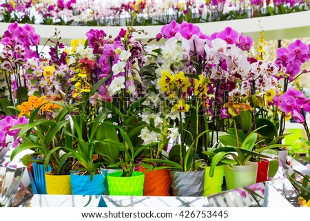 Variety of many different orchid flowers in multicolored flower pot - stock photo