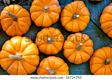 Variety of miniature pumpkins on a rustic green bench.