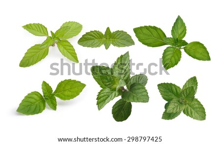 Variety of mint leaves isolated on white