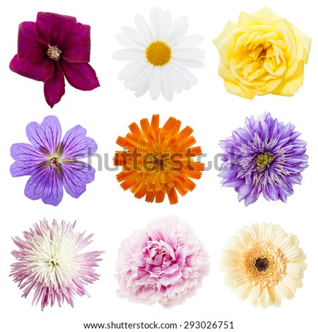 variety of multicolored blossoms arranged in a square on white background - stock photo
