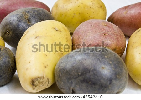Variety of Petite potatoes on white background with narrow depth of field - stock photo