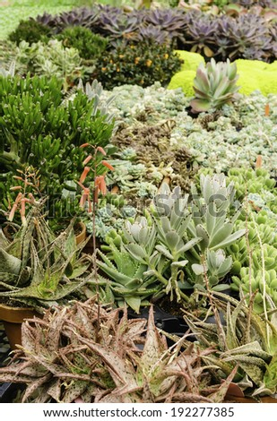Variety of potted garden plants in greenhouse before transplantation outdoors in spring (foreground focus) - stock photo