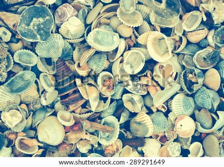 variety of sea shells from beach - vintage effect filter
