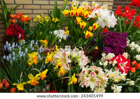 variety of spring flowers in pots on display in street shop - stock photo