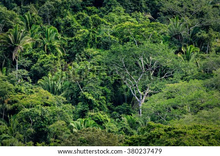 Variety of tall trees in tropical rainforest jungle - stock photo