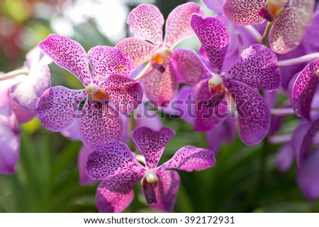 Variety Of Tropical Orchids At Orchid Garden, Kuala Lumpur.