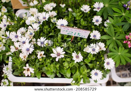 Variety of white flowers in flower shop in Japan - stock photo