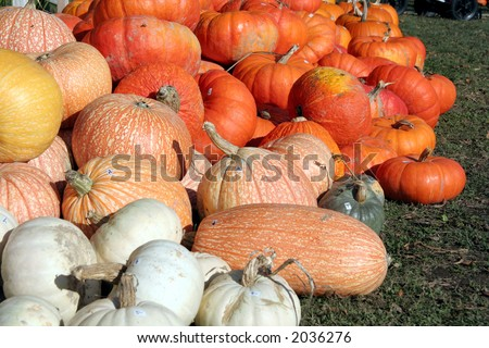 variety pumpkins and Squash for the Fall Harvest