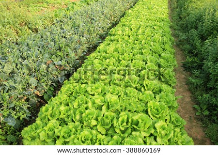 variety vegetable plants in growth at vegetable garden - stock photo