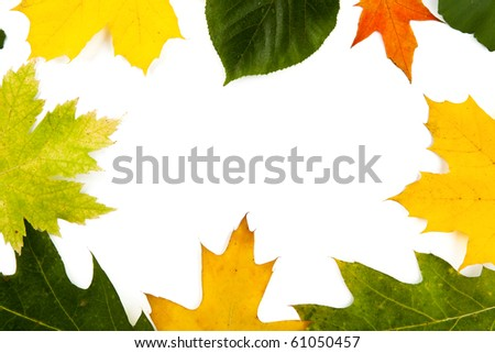 Various autumn leaves as a frame