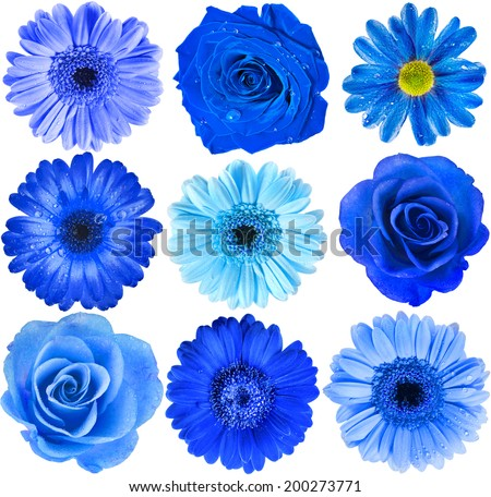Various Blue Flowers Head top view close up Selection Isolated on White Background - stock photo
