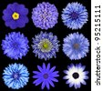 Various Blue Flowers Selection Isolated on Black Background. Daisy, Chrystanthemum, Cornflower, Dahlia, Iberis, Primrose - stock photo