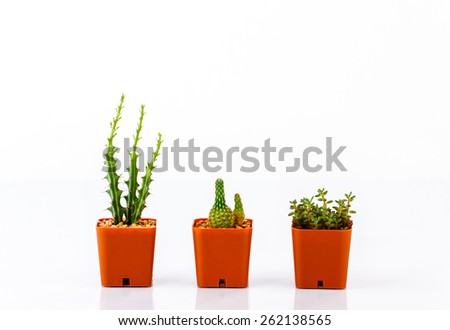 various cactus in pots isolated on white background - stock photo