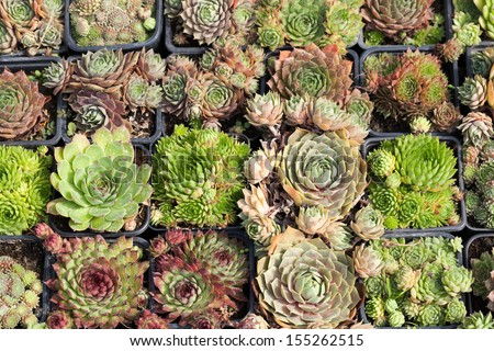 Various cactus plants as background - stock photo