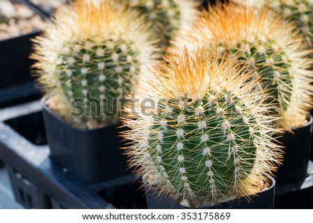 Various cactus plants, Cactus, sugar palm leaf.