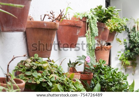 Various clay pots with green plants hanging from white wall in patio