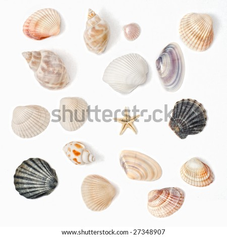 various color shell isolated on white - stock photo
