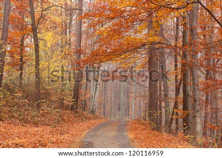 Various colorful autumn colored deciduous forest - stock photo