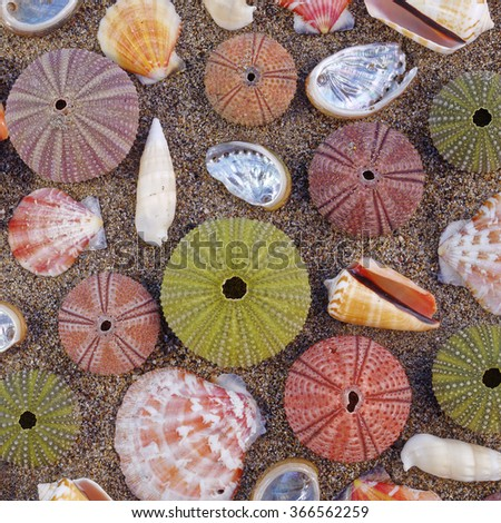 various colorful sea urchins and shells on the beach