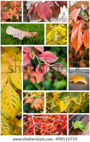 various colors of autumnal nature collage