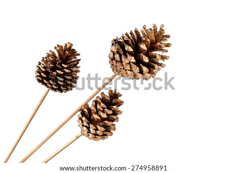 various conifer cones isolated on white - stock photo