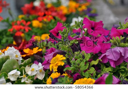 Various different flowers with vivid colours in bright summer light - stock photo