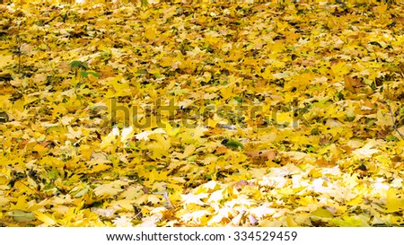 Various fallen yellow leaves in autumn forest