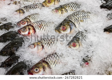 various fishes at the thailand fish market of samui island - stock photo