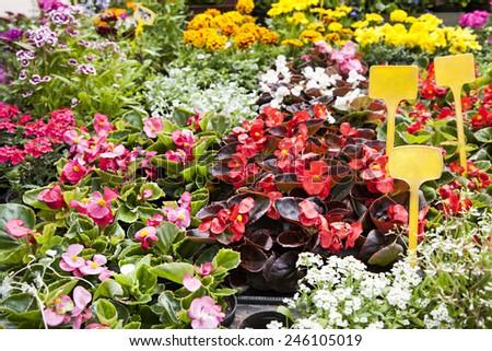 Various flowers being grown in garden - stock photo