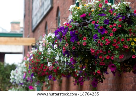 Various flowers in hanging baskets on a brick wall - stock photo