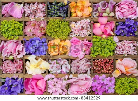 Various flowers in wooden box - stock photo