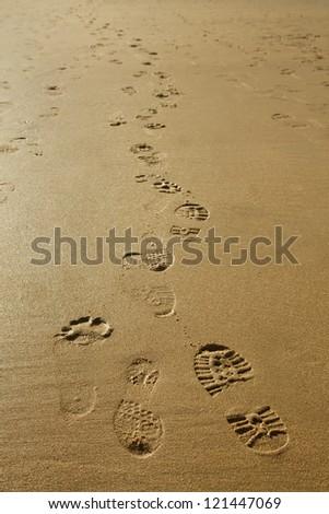 Various footprints on golden wet sand - stock photo