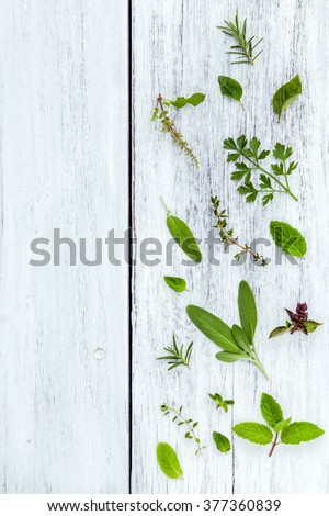 Various fresh herbs from the garden holy basil flower, basil flower,rosemary,oregano, sage,parsley ,thyme and dill over white wooden background. - stock photo