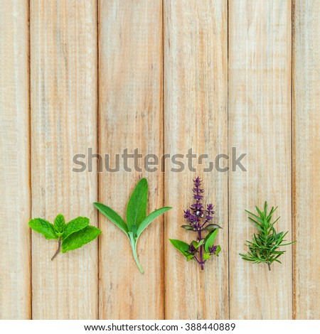 Various fresh herbs from the garden holy basil flower, basil flower,rosemary, sage over rustic wooden background. - stock photo