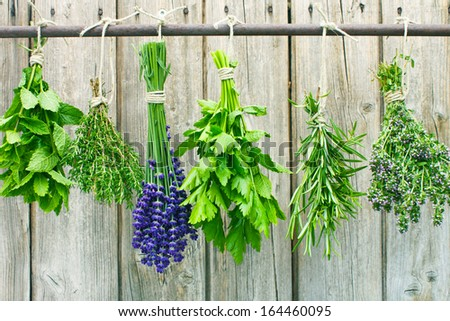 Various fresh herbs hanging in bundle on a rod to dry  - stock photo