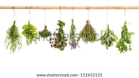 various fresh herbs hanging isolated on white background. bundle of basil, sage, thyme, mint, marjoram, lavender - stock photo