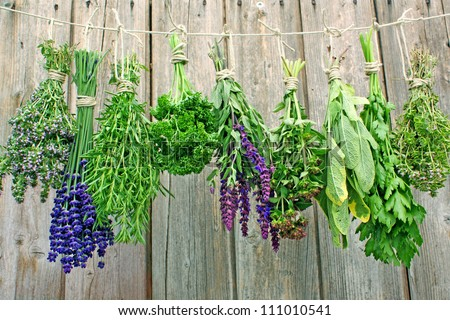 Various fresh herbs hanging on a leash