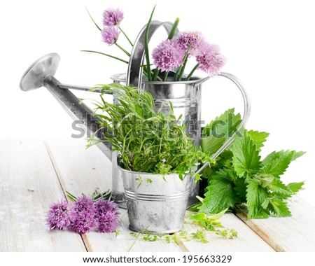 Various fresh herbs isolated on a white background. Selective focus - stock photo