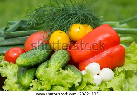 Various fresh vegetables from garden - tomatoes, cucumbers, pepper, onions, dill, chives, lettuce  - stock photo
