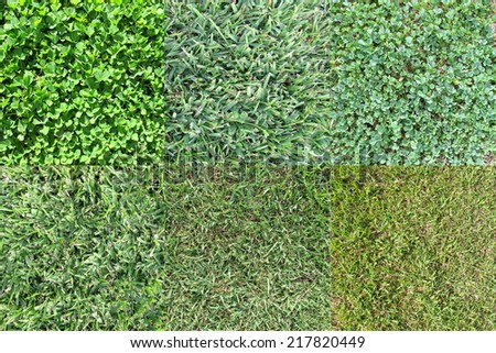 Various Grass Types  - stock photo