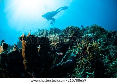 Various hard coral reefs in Gorontalo, Indonesia. Diver is swimming to look around the coral reefs. There are acropora, fire coral, branch coral, pillar coral and etc.