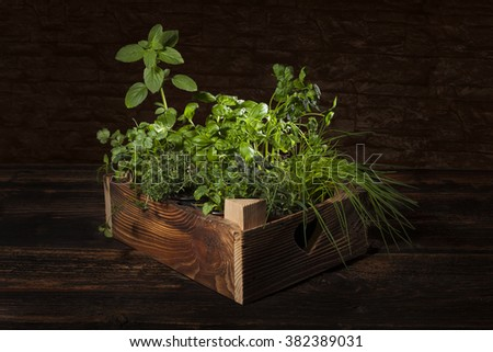 Various herbs in wooden vintage crate. Culinary aromatic herbs, basil, coriander, mint, rosemary, thyme and chive.  - stock photo