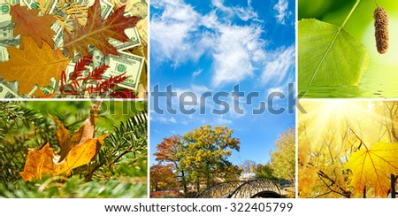 various images autumn landscapes closeup