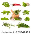 Various kind of fresh herbs with wooden mortar, isolated on white background - stock photo