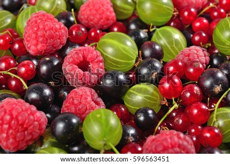 Various kinds of fresh berries close up as background texture