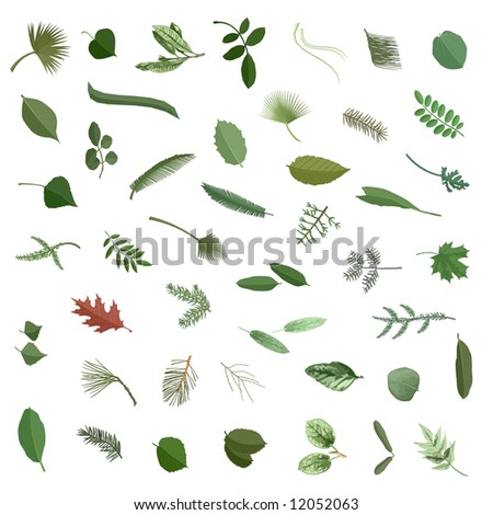 Various leaves collection Nr1, isolated